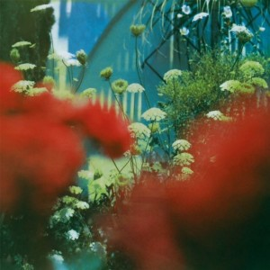 PULLED APART BY HORSES-THE HAZE