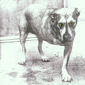 ALICE IN CHAINS-ALICE IN CHAINS